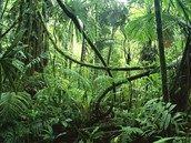 The Amazon Forest