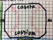 Cabrera Collisium
