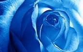 #4 Blue