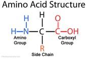 Amino Acids (Monomer)