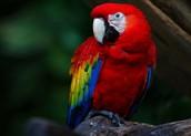 El Bosque de Honduras