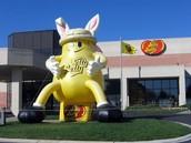 http://f.tqn.com/y/candy/1/W/B/4/-/-/jellybelly.jpg