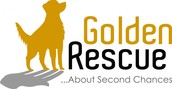 """Supporter of Golden Rescue who rescue Golden Retievers and have their own """"shop dog"""", Jake"""