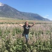 Clary Sage in Utah