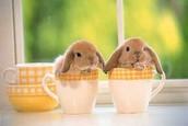 ארנבים יכולים להיות שובבים