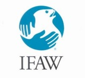 what's IFAW.