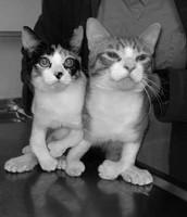 Subject Kittens