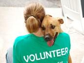 En que cosiste el trabajo de voluntariio alli?