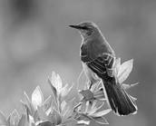 To Kill Mockingbird