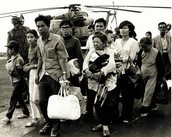 The Vietnamese Immigring