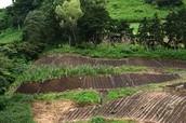 A piece of farm land