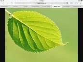 Leaves make food