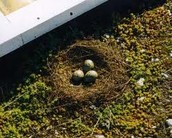 Bird's nest on a roof of a construction site.