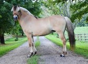 Overview on the horses body structure