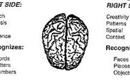 Left-Sided Brain
