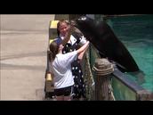 Petting A Sea Lion @ SeaWorld