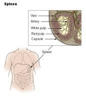 Organs harmed
