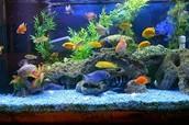 Aquarium Owners