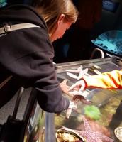Me petting live starfish