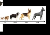 No aggressive dogs will be tolerated. Sizes will vary from the smallest dog to about the size of around a German Sheperd