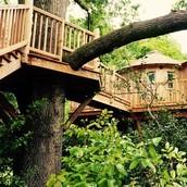 Habitación en los árboles