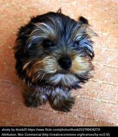 mixed dog breed