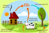 Carbon and Oxygen Cycle Videos