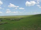 A temperate grassland