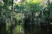 La deforestazione amazzonica