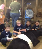 The boys at the petting farm!