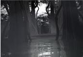 Swamp of sorrow