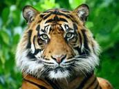 ¿Por Que el 29 de abril se celebra el Día del Animal?