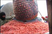 Greenlands fishing