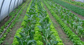 Horticulture & Landscape Management