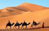 Camels working in Sadui Arabia