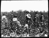 African American Slaves (Runaway Slaves)