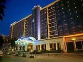 Сat Hotel в Ростове-на-Дону