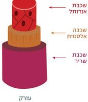 מבנה העורק