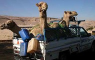 Camel Movement