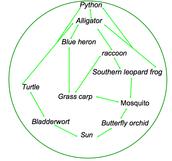 Food Web (Florida)