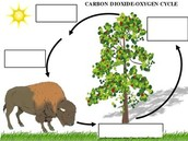 Carbon Dioxide-Oxygen Cylce