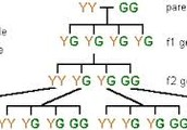 What is the study of genetics?