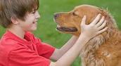 כלב ידידותי לילדים