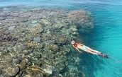 Beautiful reefs in Fiji