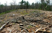 Interesting news in new york about biomass