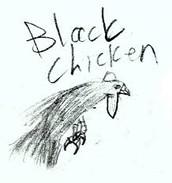 a black chicken
