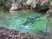 Blue Springs, Florida