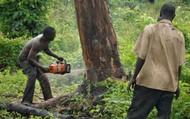 Loggers in Kenya