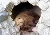 Bear Hibernation