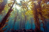 Kelp Forest 2.0